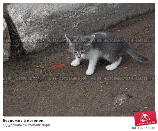 Бездомный котенок, фото № 146188, снято 23 апреля 2006 г. (c) Дудакова / Фотобанк Лори