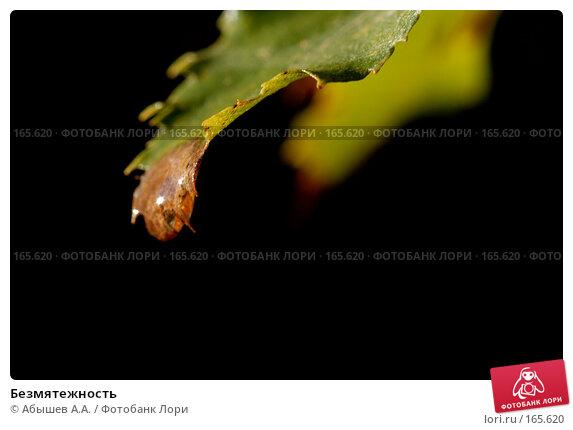Купить «Безмятежность», фото № 165620, снято 22 сентября 2007 г. (c) Абышев А.А. / Фотобанк Лори