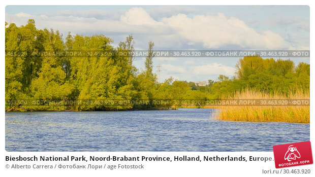 Biesbosch National Park, Noord-Brabant Province, Holland, Netherlands, Europe. Стоковое фото, фотограф Alberto Carrera / age Fotostock / Фотобанк Лори