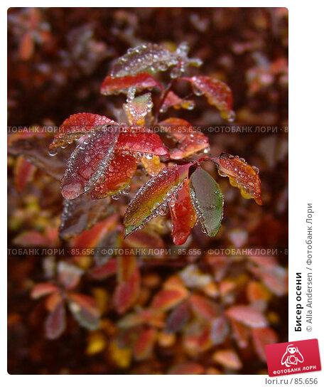 Купить «Бисер осени», фото № 85656, снято 25 ноября 2006 г. (c) Alla Andersen / Фотобанк Лори