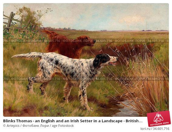 Blinks Thomas - an English and an Irish Setter in a Landscape - British... Стоковое фото, фотограф Artepics / age Fotostock / Фотобанк Лори