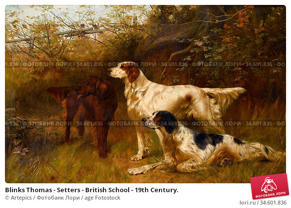Blinks Thomas - Setters - British School - 19th Century. Стоковое фото, фотограф Artepics / age Fotostock / Фотобанк Лори