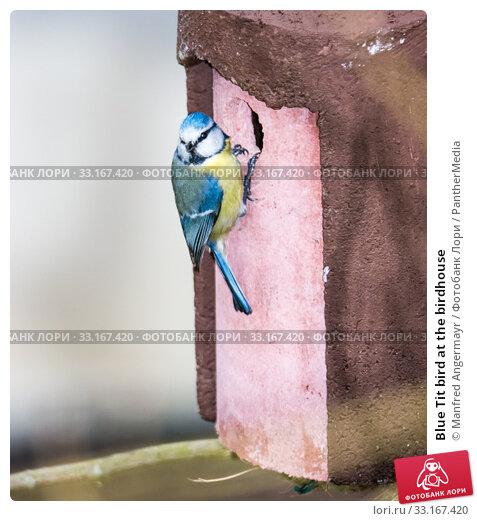 Купить «Blue Tit bird at the birdhouse», фото № 33167420, снято 28 марта 2020 г. (c) PantherMedia / Фотобанк Лори