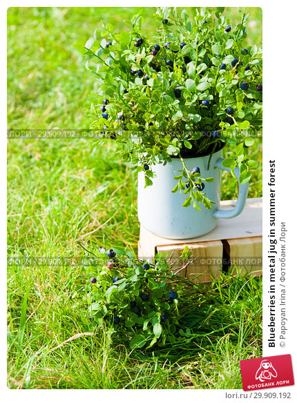 Купить «Blueberries in metal jug in summer forest», фото № 29909192, снято 19 июля 2018 г. (c) Papoyan Irina / Фотобанк Лори