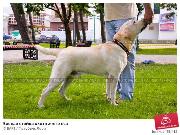 Боевая стойка охотничего пса, фото № 158412, снято 12 июня 2007 г. (c) BART / Фотобанк Лори