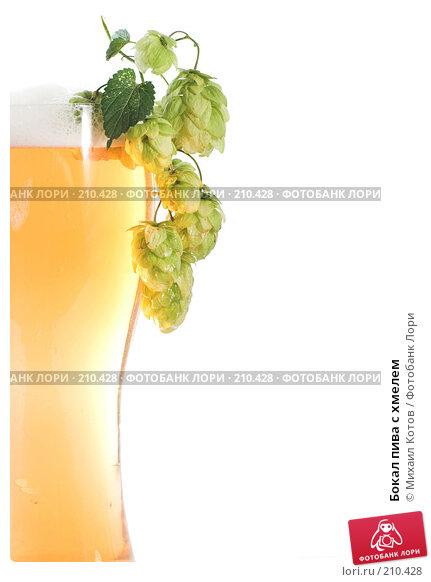 Бокал пива с хмелем, фото № 210428, снято 1 сентября 2007 г. (c) Михаил Котов / Фотобанк Лори