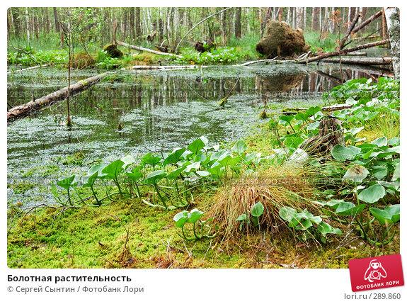 Болотная растительность, фото № 289860, снято 30 июня 2007 г. (c) Сергей Сынтин / Фотобанк Лори
