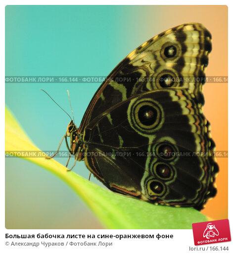 Большая бабочка листе на сине-оранжевом фоне, фото № 166144, снято 2 января 2008 г. (c) Александр Чураков / Фотобанк Лори