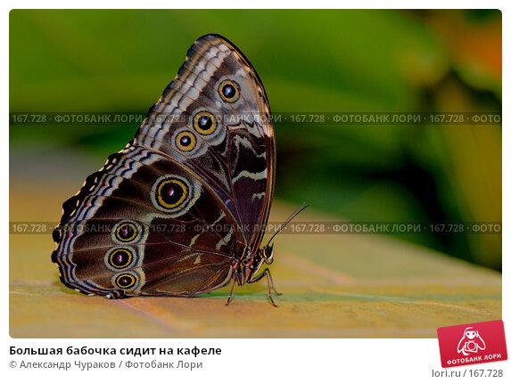 Большая бабочка сидит на кафеле, фото № 167728, снято 2 января 2008 г. (c) Александр Чураков / Фотобанк Лори
