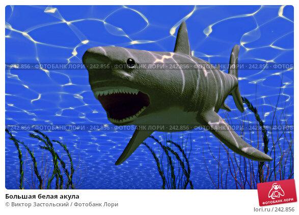 Большая белая акула, иллюстрация № 242856 (c) Виктор Застольский / Фотобанк Лори