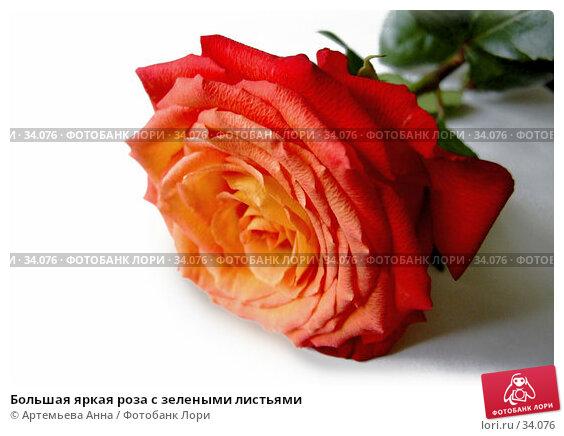 Купить «Большая яркая роза с зелеными листьями», фото № 34076, снято 8 января 2006 г. (c) Артемьева Анна / Фотобанк Лори