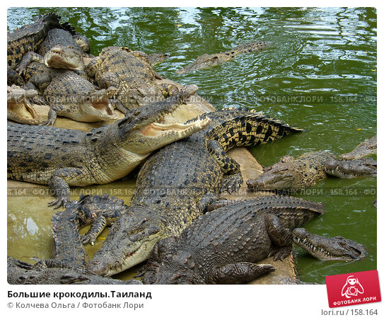 Большие крокодилы.Таиланд, фото № 158164, снято 25 марта 2007 г. (c) Колчева Ольга / Фотобанк Лори