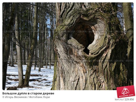 Большое дупло в старом дереве, фото № 229856, снято 22 марта 2008 г. (c) Игорь Веснинов / Фотобанк Лори