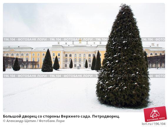 Купить «Большой дворец со стороны Верхнего сада. Петродворец.», эксклюзивное фото № 196104, снято 27 января 2008 г. (c) Александр Щепин / Фотобанк Лори