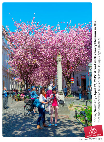 Bonn, Germany - April 21, 2015: street with cherry blossom in the... Стоковое фото, фотограф Zoonar.com/Christian Mueller / age Fotostock / Фотобанк Лори