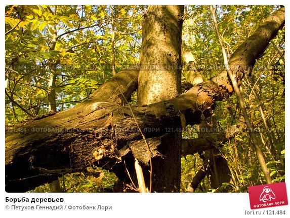 Борьба деревьев, фото № 121484, снято 22 сентября 2007 г. (c) Петухов Геннадий / Фотобанк Лори