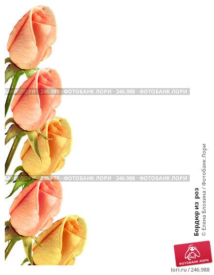 Купить «Бордюр из  роз», фото № 246988, снято 27 апреля 2018 г. (c) Елена Блохина / Фотобанк Лори
