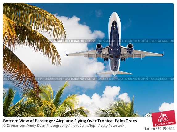 Bottom View of Passenger Airplane Flying Over Tropical Palm Trees. Стоковое фото, фотограф Zoonar.com/Andy Dean Photography / easy Fotostock / Фотобанк Лори