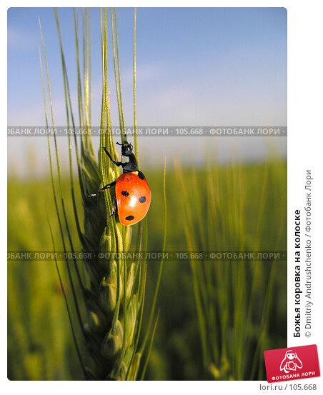 Божья коровка на колоске, фото № 105668, снято 3 июня 2006 г. (c) Dmitriy Andrushchenko / Фотобанк Лори