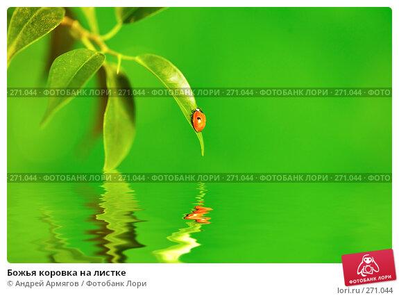 Божья коровка на листке, фото № 271044, снято 8 октября 2007 г. (c) Андрей Армягов / Фотобанк Лори
