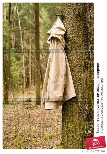 Купить «Брезентовая куртка, висящая на дереве», фото № 1671324, снято 24 марта 2019 г. (c) Светлана Силецкая / Фотобанк Лори