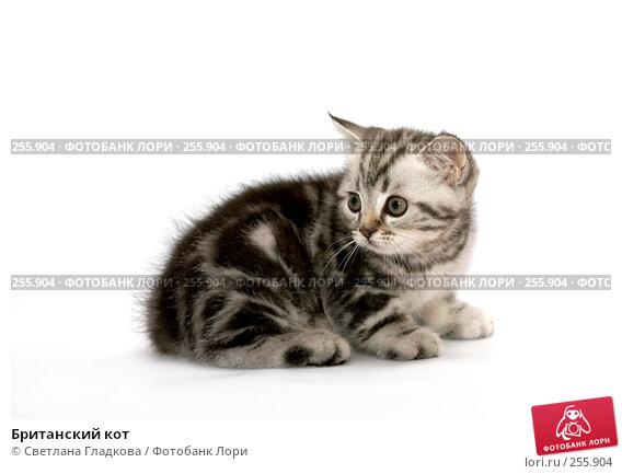 Британский кот, фото № 255904, снято 16 октября 2007 г. (c) Cветлана Гладкова / Фотобанк Лори