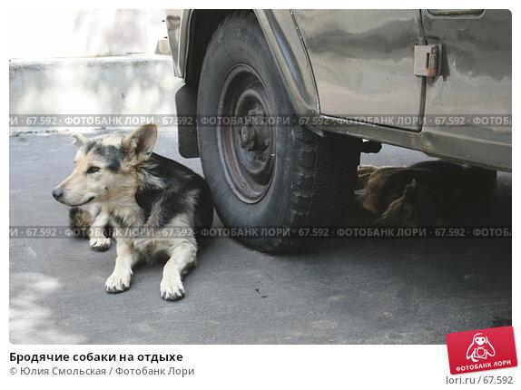 Бродячие собаки на отдыхе, фото № 67592, снято 30 июля 2007 г. (c) Юлия Смольская / Фотобанк Лори