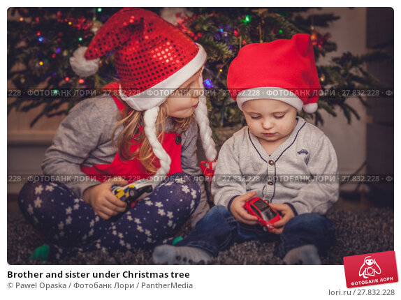 Купить «Brother and sister under Christmas tree», фото № 27832228, снято 21 октября 2018 г. (c) PantherMedia / Фотобанк Лори