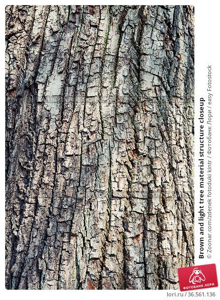 Brown and light tree material structure closeup. Стоковое фото, фотограф Zoonar.com/zdenek fotoduki kintr / easy Fotostock / Фотобанк Лори