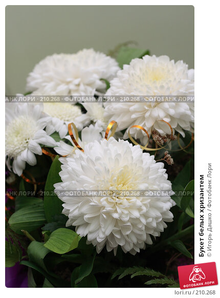 Букет белых хризантем, фото № 210268, снято 27 ноября 2007 г. (c) Игорь Дашко / Фотобанк Лори