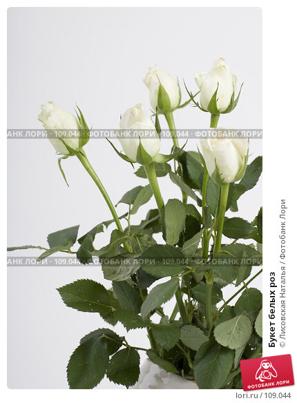 Букет белых роз, фото № 109044, снято 1 ноября 2007 г. (c) Лисовская Наталья / Фотобанк Лори