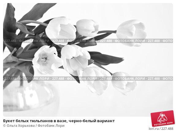 Букет белых тюльпанов в вазе, черно-белый вариант, фото № 227488, снято 8 марта 2008 г. (c) Ольга Хорькова / Фотобанк Лори