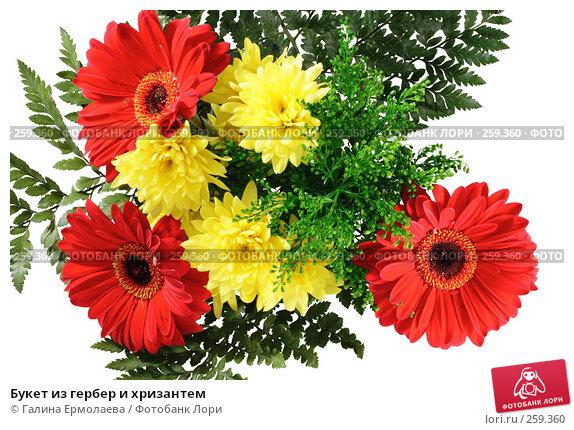 Букет из гербер и хризантем, фото № 259360, снято 19 апреля 2008 г. (c) Галина Ермолаева / Фотобанк Лори