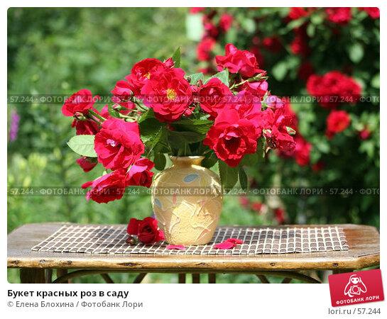 Букет красных роз в саду, фото № 57244, снято 27 июня 2007 г. (c) Елена Блохина / Фотобанк Лори