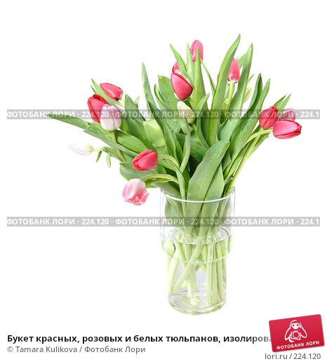 Букет красных, розовых и белых тюльпанов, изолированное изображение, фото № 224120, снято 15 марта 2008 г. (c) Tamara Kulikova / Фотобанк Лори