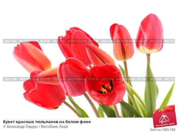 Купить «Букет красных тюльпанов на белом фоне», фото № 303156, снято 21 апреля 2008 г. (c) Александр Паррус / Фотобанк Лори
