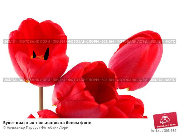 Букет красных тюльпанов на белом фоне, фото № 303164, снято 21 апреля 2008 г. (c) Александр Паррус / Фотобанк Лори