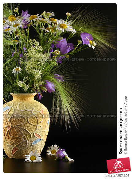Букет полевых цветов, фото № 257696, снято 24 июня 2007 г. (c) Елена Блохина / Фотобанк Лори