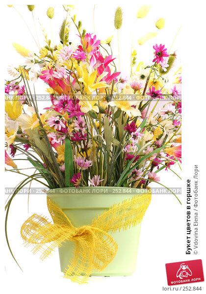 Букет цветов в горшке, фото № 252844, снято 27 февраля 2008 г. (c) Vdovina Elena / Фотобанк Лори