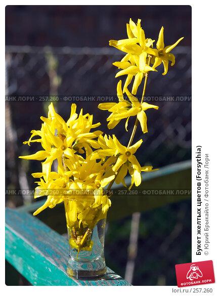 Букет желтых цветов (Forsythia), фото № 257260, снято 11 апреля 2008 г. (c) Юрий Брыкайло / Фотобанк Лори