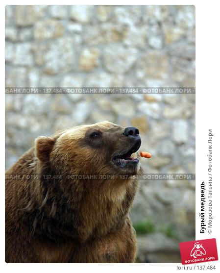 Бурый медведь, фото № 137484, снято 9 июля 2005 г. (c) Морозова Татьяна / Фотобанк Лори
