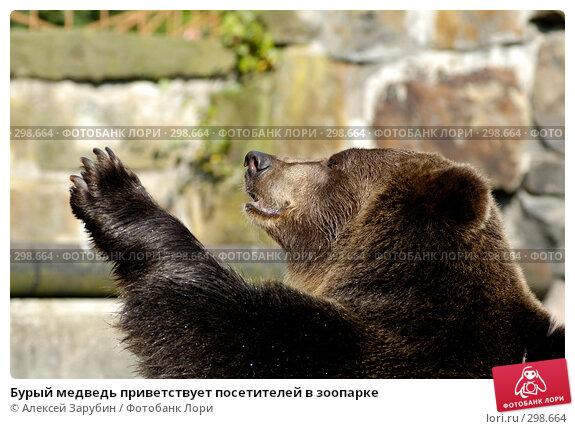 Бурый медведь приветствует посетителей в зоопарке, фото № 298664, снято 22 сентября 2007 г. (c) Алексей Зарубин / Фотобанк Лори