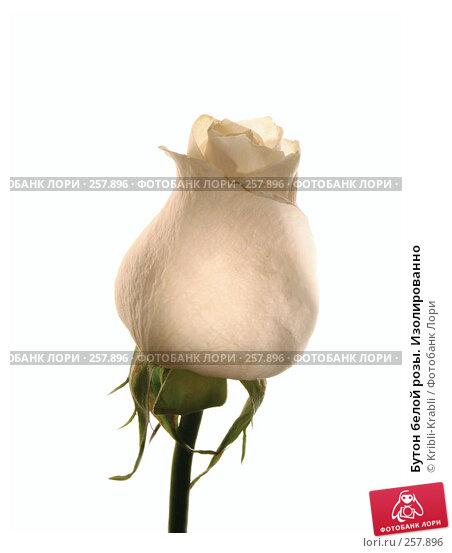 Бутон белой розы. Изолированно, фото № 257896, снято 9 марта 2008 г. (c) Kribli-Krabli / Фотобанк Лори