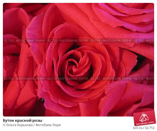 Бутон красной розы, фото № 32712, снято 1 июня 2005 г. (c) Ольга Хорькова / Фотобанк Лори
