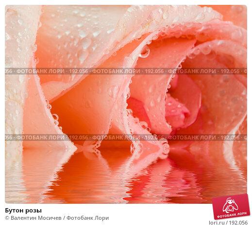 Бутон розы, фото № 192056, снято 16 февраля 2007 г. (c) Валентин Мосичев / Фотобанк Лори