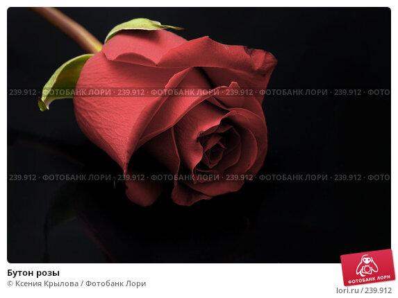 Бутон розы, фото № 239912, снято 30 марта 2008 г. (c) Ксения Крылова / Фотобанк Лори