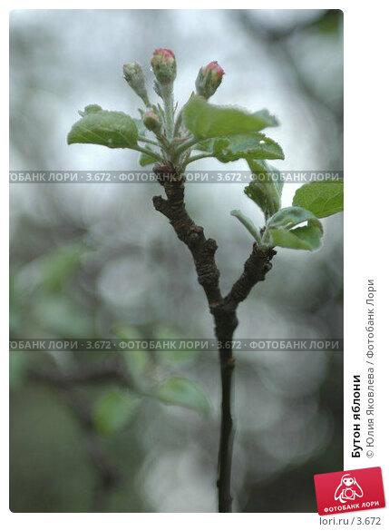 Бутон яблони, фото № 3672, снято 16 мая 2006 г. (c) Юлия Яковлева / Фотобанк Лори