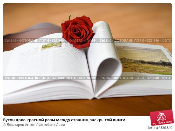 Бутон ярко красной розы между страниц раскрытой книги, фото № 326840, снято 27 апреля 2017 г. (c) Лошкарев Антон / Фотобанк Лори