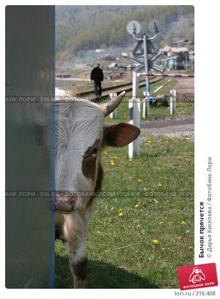 Бычок прячется, фото № 316408, снято 31 мая 2008 г. (c) Дарья Киселева / Фотобанк Лори