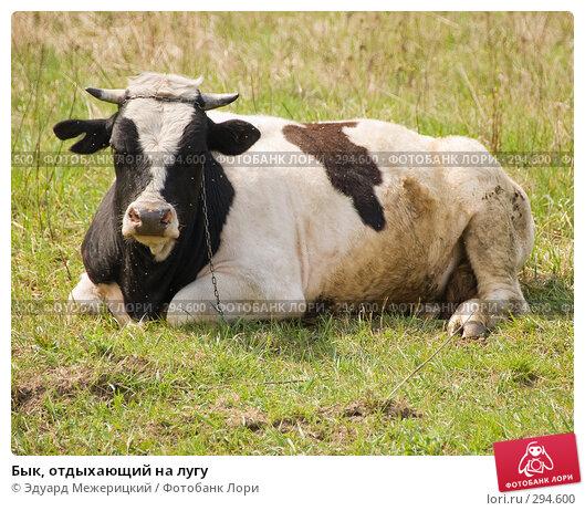 Купить «Бык, отдыхающий на лугу», фото № 294600, снято 2 мая 2008 г. (c) Эдуард Межерицкий / Фотобанк Лори